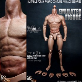 ZC TOYS BODY NUDE MALE MUSCULAR FIGURE BODY FOR HOT TOYS ZC TOYS ...1/6 12""
